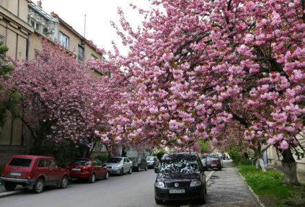 Де і коли помилуватися цвітом цієї весни?