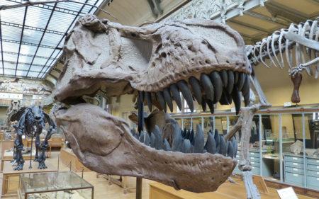 Прогулянка з динозаврами: 5 захопливих музеїв світу
