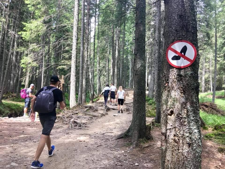 люди йдуть в гору по лісу