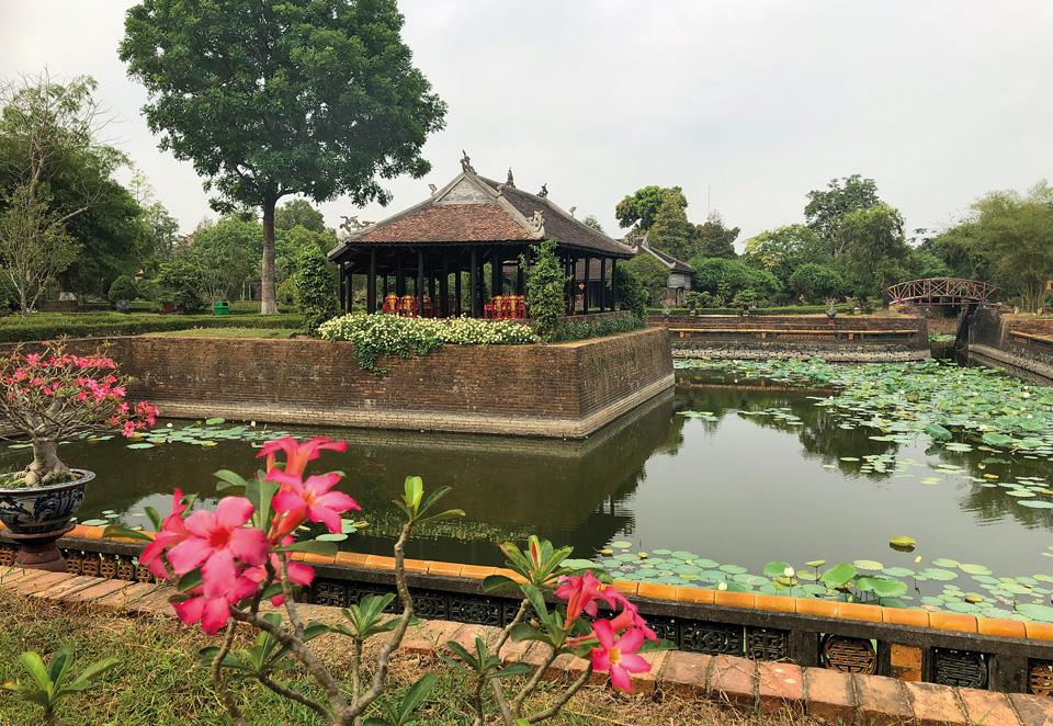 речка, цветы, лилии, пруд