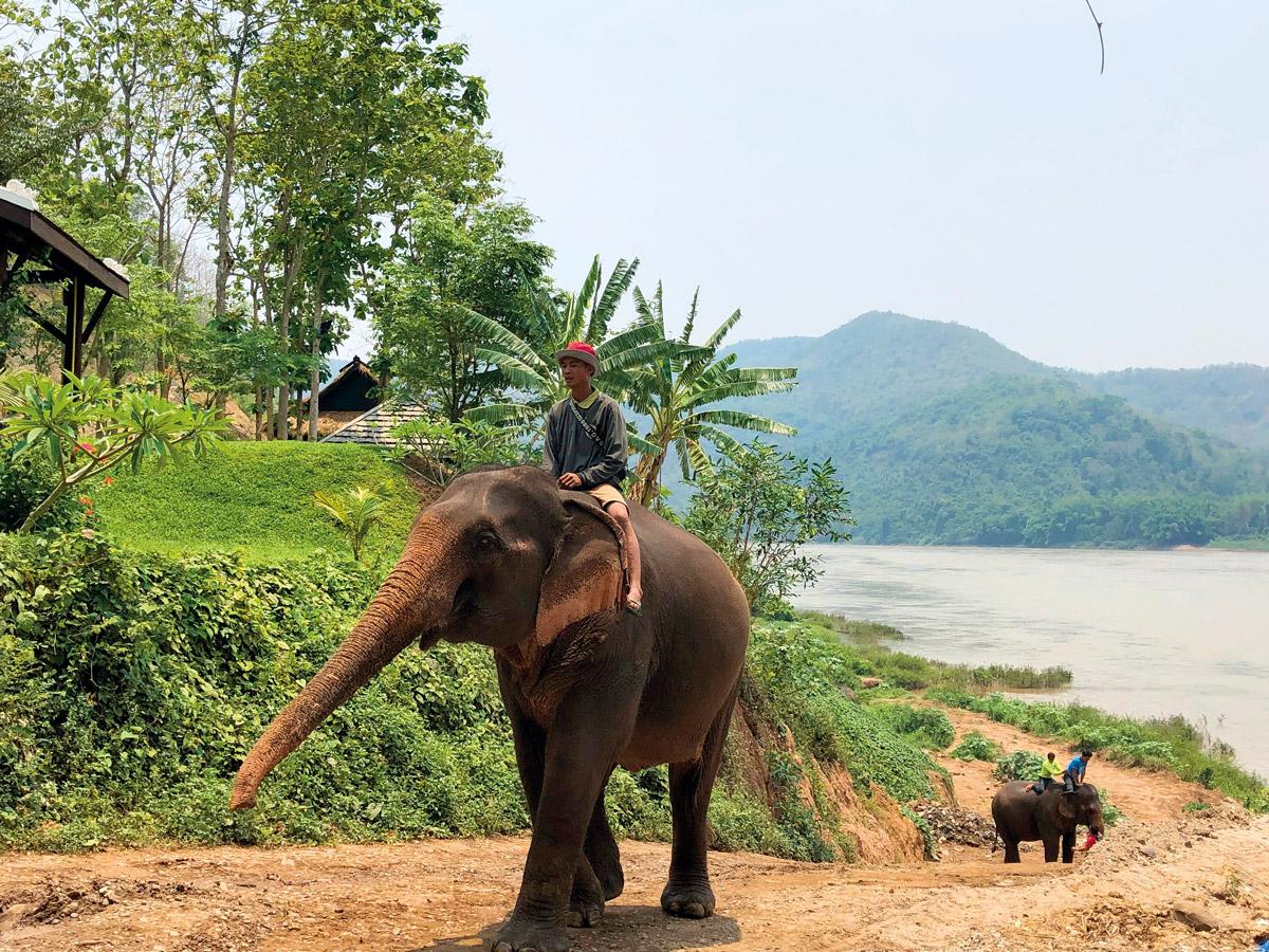 Человек едет на слоне