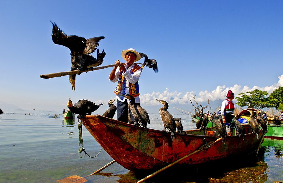 ловля риби з допомогою бакланів