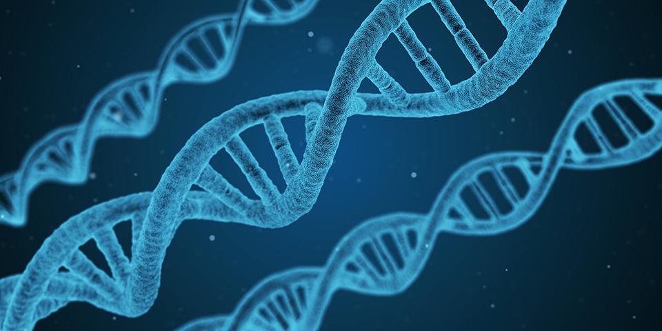 генетичний код