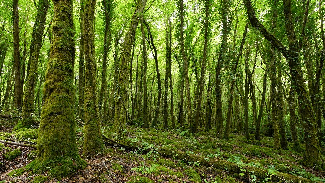 Лісовий парк Толлімор